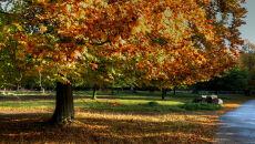 Zubilewicz: niech żyje wrzesień