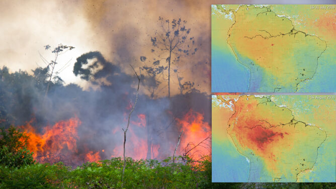 Pożary lasów wpływają na jakość powietrza. Widać to dzięki satelitom
