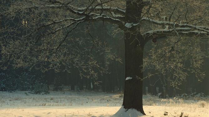 Prognoza pogody na dziś: śnieg i silny wiatr